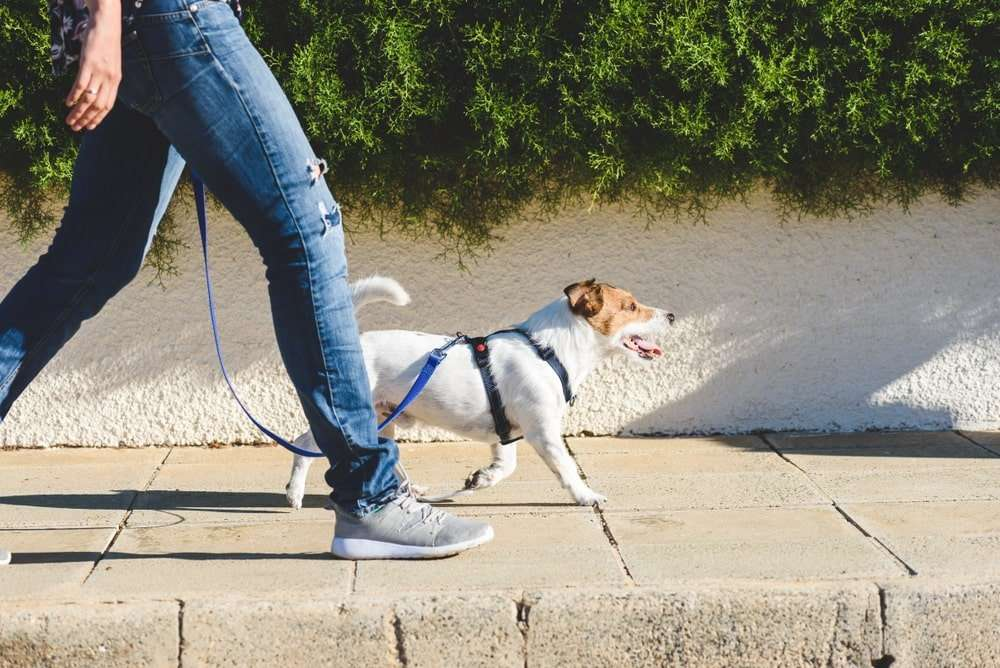 6 SURPRISING FACTS ABOUT CBD FOR PETS